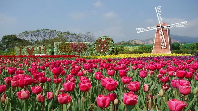 《台中旅遊》后里。中社觀光花市 鬱金香花季開催中!