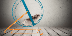 hamster on a hamster wheel