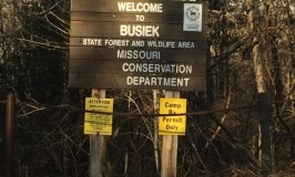 Busiek State Forest December 2015
