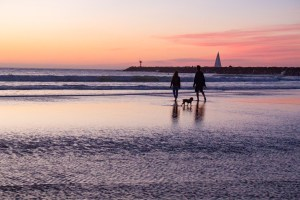 Two people and a small dog walking the beach in silhouette