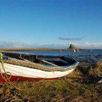 Lindisfarne: Going wild on a small island
