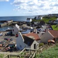 St Abb's Head - Seabird 'City'