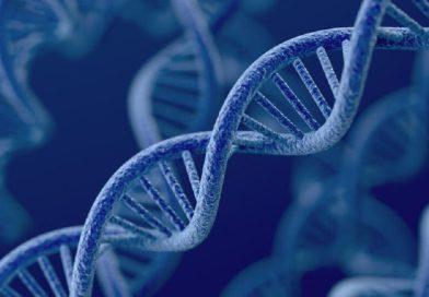 U Srbima nema turskih gena