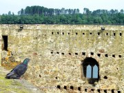 TAMOiOVDE- Smederevska tvrđava-IMGP1084