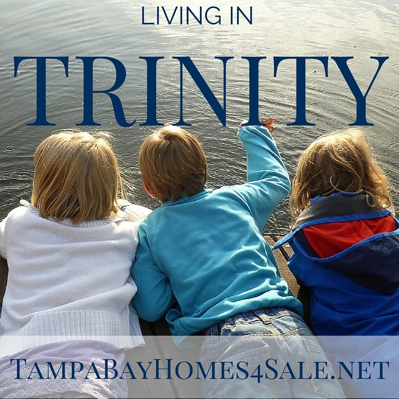 Living in Trinity, FL - Homes for Sale