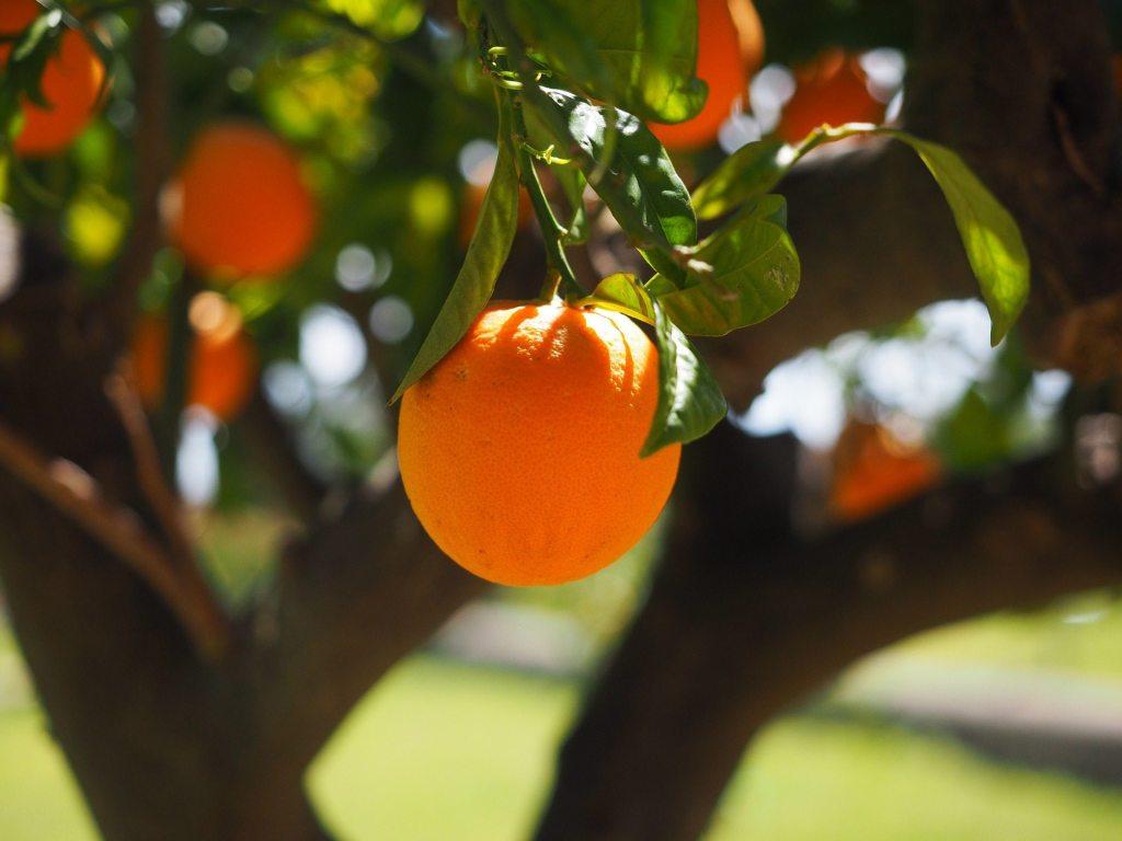 about-citrus-park-fl-citrus-park-real-estate-listings