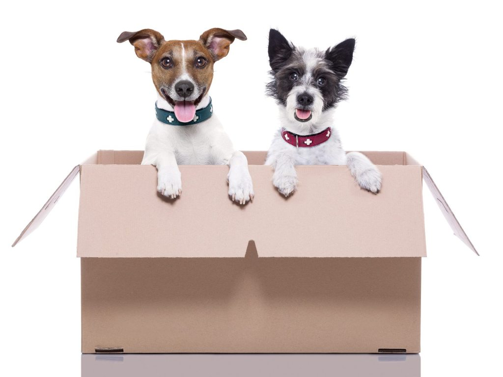 Selling Your Home with Pets - Tampa Bay Homes