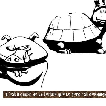 [Conte] A cause de la tortue, le porc est condamné à fouiller la terre – Tamta du Mboa