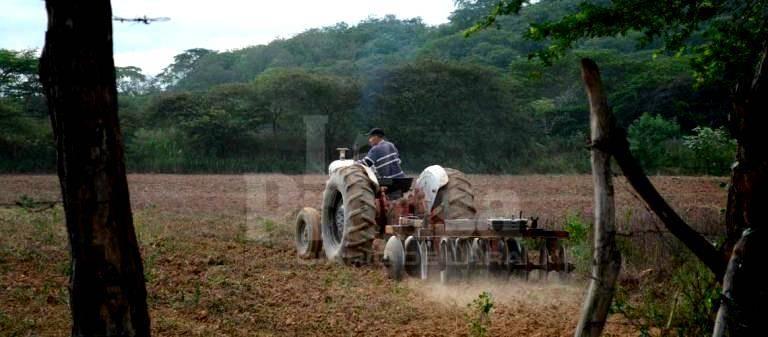 Advierten que mano de obra del campo venezolano se ha reducido por el aumento de la inseguridad