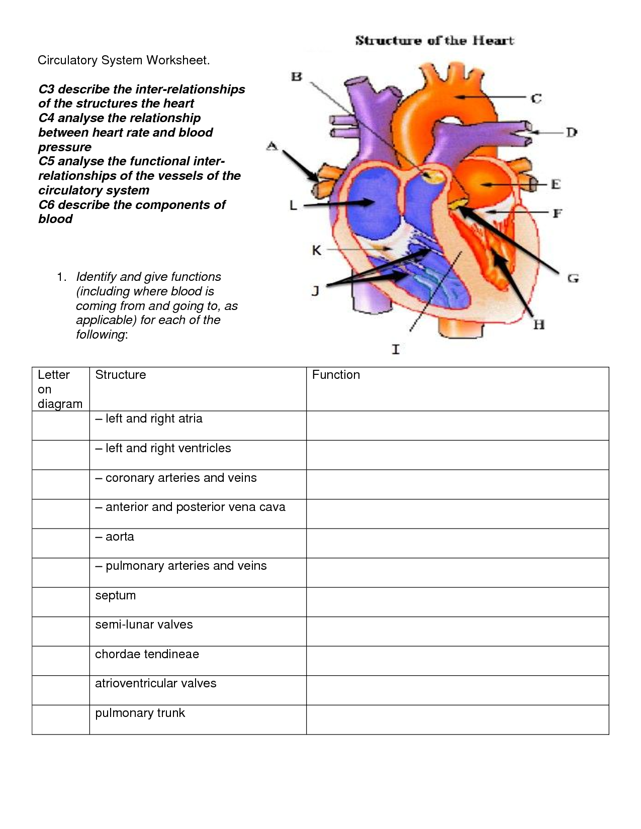 Cardiovascular System Worksheets For High School