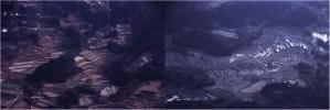 「鴨川の棚田 空撮」 撮影者:鈴木正昭 撮影地:千葉県鴨川 撮影日:2001年3月14日