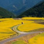 八重地(やえじ)| 徳島県上勝町