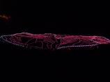 あぜのきらめき(太陽光利用のLEDバージョン) 白米棚田 撮影者:川口 喜仙 撮影地:白米棚田(輪島市/石川県) 撮影日:2012年11月16日