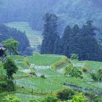 「滋賀県高島町畑」 撮影者:中野浩行 撮影地:滋賀県高島町畑 撮影日:2006年5月18日