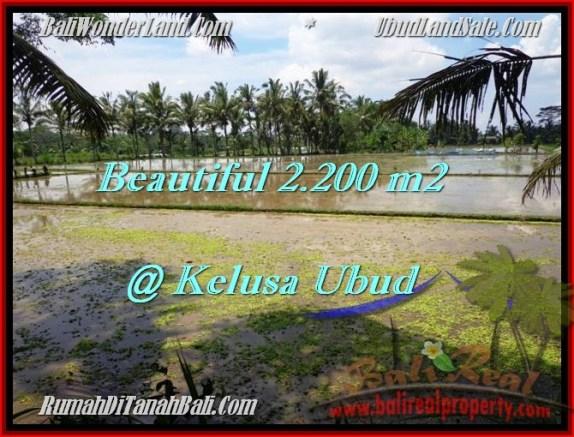 TANAH di UBUD BALI DIJUAL 2,200 m2 di Ubud Payangan