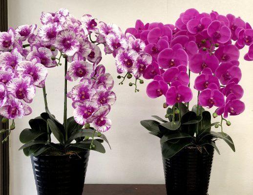 胡蝶蘭の造花の鉢物5本立ち