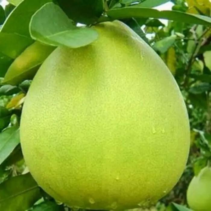 jeruk pamelo madu