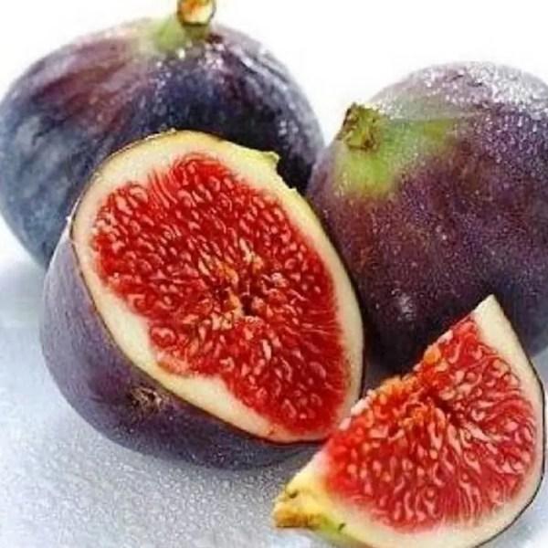 bibit buah tin ungu