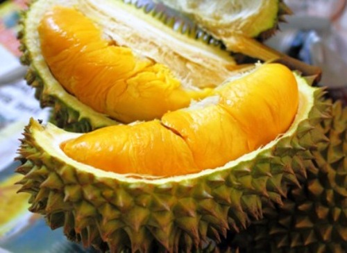 bibit-durian-musang-king-1