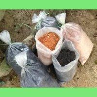 Menyemai tanaman dengan tanah organik dan sabut kelapa