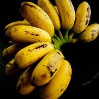 Tanaman pokok pisang raja dan info berkaitan