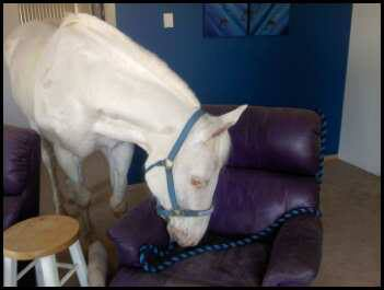Who is your horse, I mean house guest