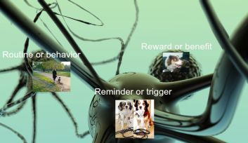 The neural pathway to habit