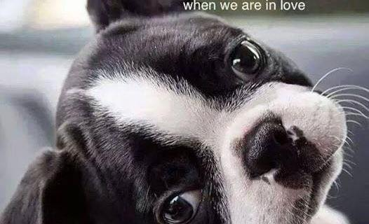 dog's gaze of love