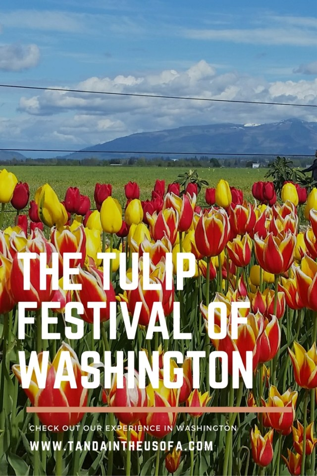 Tulip Festival in Washington, just like the ones in Holland!