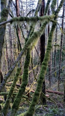 More mossy trees!