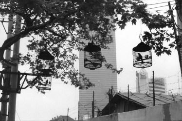 Qingdao Vogelkäfige vor Hochhaus
