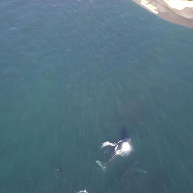 whale tandem paragliding view