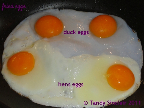 """""""Fried Eggs"""""""