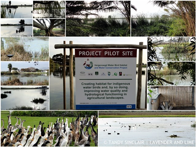 Out And About Friday 12 June 2015 The Vergenoegd Waterbird Habitat and Water Quality Project
