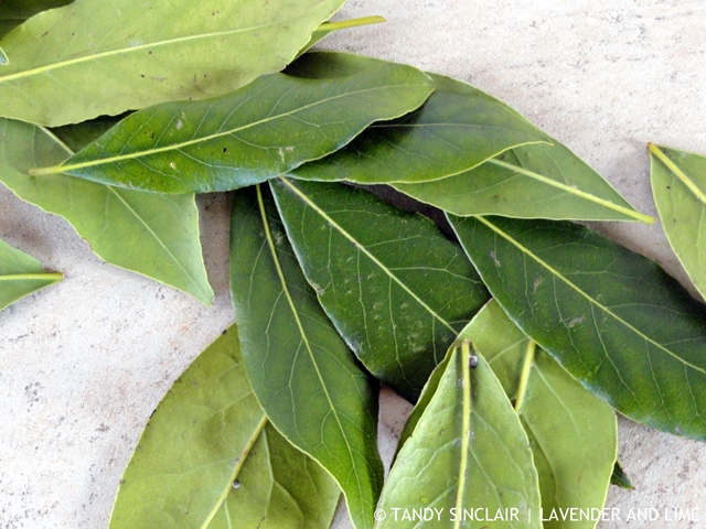 Bay Leaves October 2015