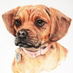 portrait of Puggle in pastel from a clients photograph