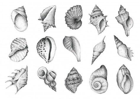 A4 15 Shells_01