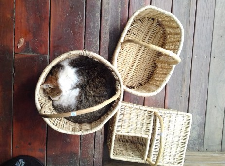 At Nature's Way. Only the basket was for sale though.