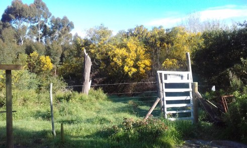 A little gate and a thicket? Irresistable!