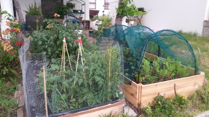 My two raised beds