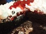 black forest chocolate cake 1