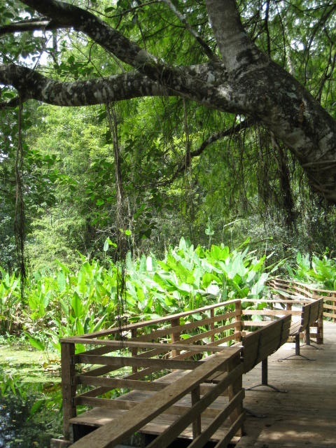 Corkscrew Sanctuary Boardwalk
