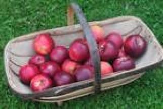 apples2010
