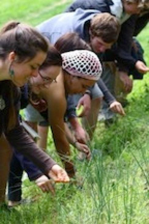 group-picking-garlic-grass-Alissa-200x300