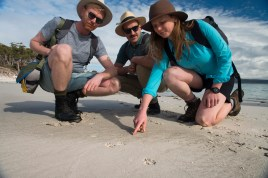 Tasmanian Devil footprints in the sand The Maria Island Walk 2014