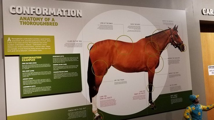 1-Anatomy of Thoroughbred