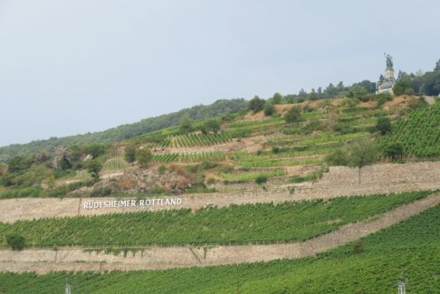 Rhine Gorge Vineyards