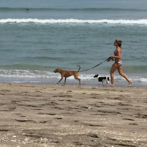Beach_Jogging_Dogs