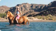 Ocean horseback riding at Danzante.