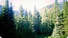 Glacier Country of Idaho